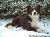 Bearbeitet mit BILDSCHUTZ PRO 3 - www.bildschutz.de - schützt Foto und Bild