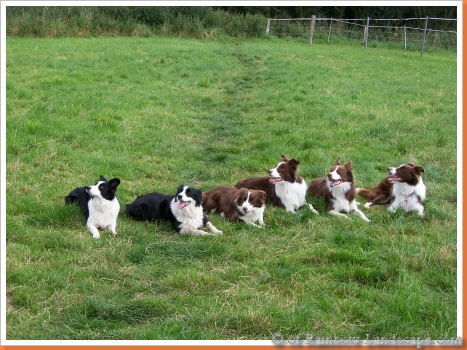 C-Wurf - Border Collies of Rainbow Landscape