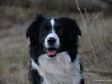 Border Collies of Rainbow Landscape