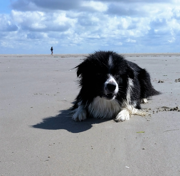 St. Peter Ording 3 August 2016