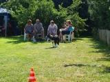 Border Collie Welpen Treffen 2012
